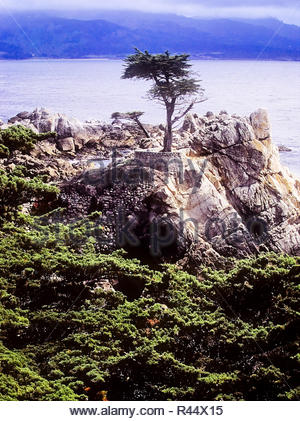 The Lone Cypress tree along the 17 mile drive on the Monterey peninsula in California. - Stock Photo