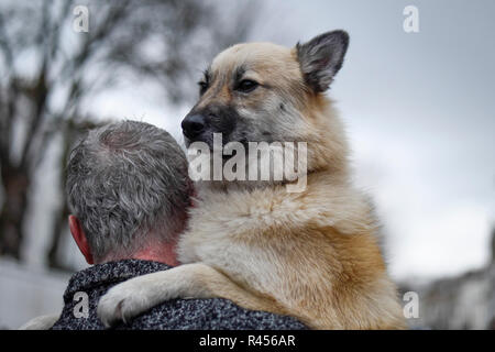London, UK.  25 November 2018. Tao, a pomsky, takes part in the Primrose Hill dog show during the Primrose Hill Christmas Fair.  The fun show raises money for local charities - Chalk Farm Food Bank and St Mary's Church Winter Appeal.   Credit: Stephen Chung / Alamy Live News - Stock Photo