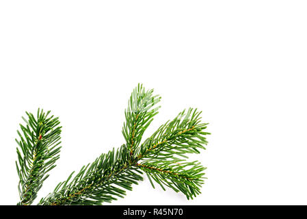 green branches on white background - Stock Photo