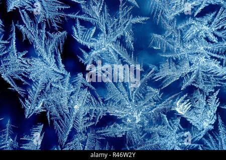 Frosty - Stock Photo