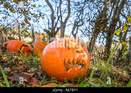 Discarded pumpkins after the night before! Carved pumpkin heads dumped in woodland after the season of Halloween parties & celebrations has finished. - Stock Photo