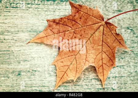 Maple leaf on old wood texture. - Stock Photo