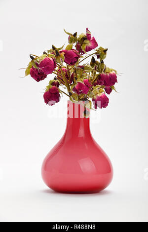 Dried red roses in pink vase on white background - Stock Photo