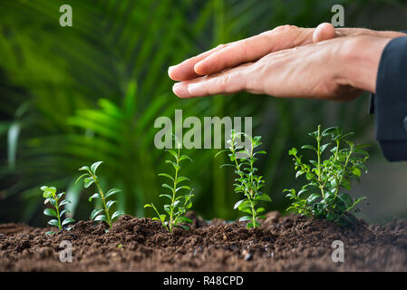 Businessman's Hands Protecting Plants Growing On Land - Stock Photo