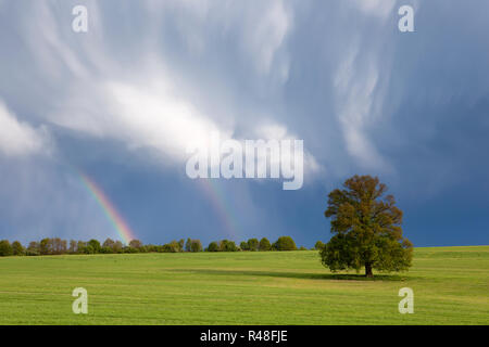 single tree in the field and a thundercloud with rainbow in the hood - Stock Photo