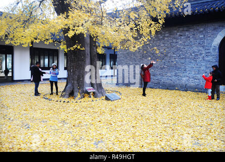 Yangzhou, China's Jiangsu Province. 25th Nov, 2018. Visitors enjoy a moment under a ginkgo tree at the Shangfang Temple in Yangzhou City, east China's Jiangsu Province, Nov. 25, 2018. Credit: Pu Liangping/Xinhua/Alamy Live News - Stock Photo