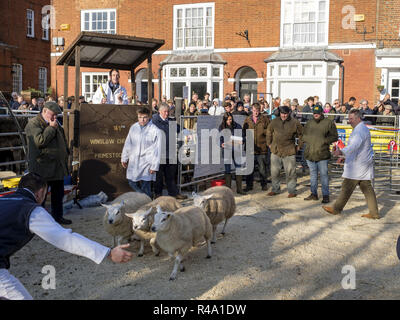 Winslow, UK - November 26, 2018. Prize sheep are sold by auction at the Winslow Primestock Show. The show is an annual event held in the historic market town in Buckinghamshire. Credit: Paul Maguire/Alamy Live News - Stock Photo