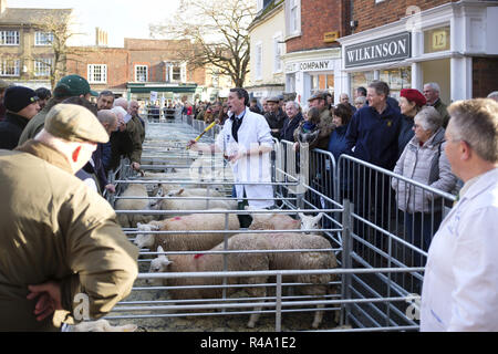 Winslow, UK - November 26, 2018. Sheep are sold by auction at the Winslow Primestock Show. The show is an annual event held in the historic market town in Buckinghamshire. Credit: Paul Maguire/Alamy Live News - Stock Photo