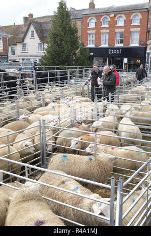Winslow, UK - November 26, 2018. Sheep are held in pens at the Winslow Primestock Show. The show is an annual event held in the historic market town in Buckinghamshire. Credit: Paul Maguire/Alamy Live News - Stock Photo