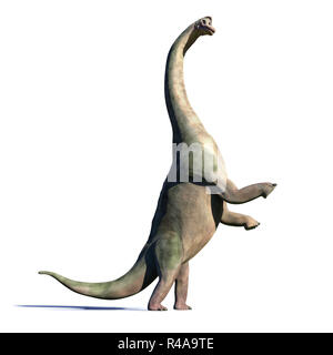 Brachiosaurus altithorax from the Late Jurassic in action (3d illustration isolated with shadow on white background) - Stock Photo