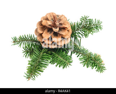 Natural branch of Christmas tree with cone isolated on white background - Stock Photo