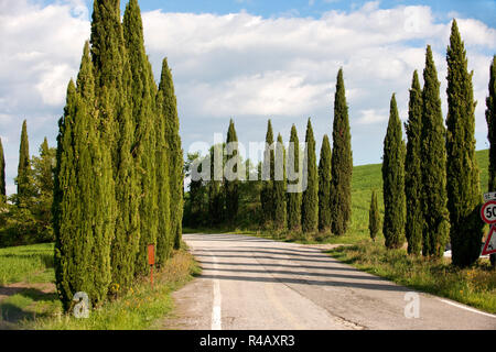 country road, cypresses, Tuscany, Italy, Europe, (Cupressus sempervirens) - Stock Photo