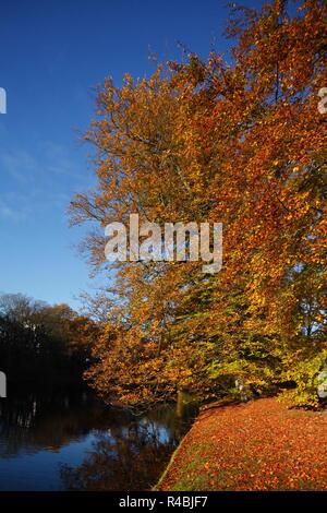 Discolored trees in thePark Wallanlagen in autumn, Bremen, Germany, Europe I Verfärbte Bäume in den Wallanlagen im Herbst , Bremen, Deutschland, Europ - Stock Photo