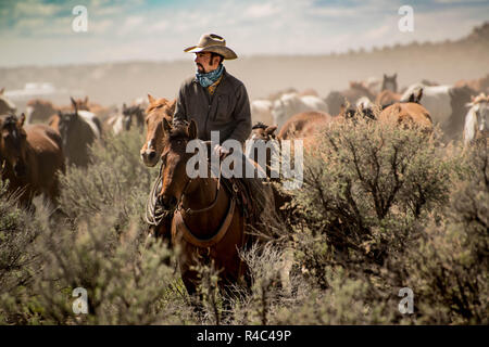 Cowboy wrangler with white hat leading horse herd through sagebrush prairie during a dusty trail drive roundup - Stock Photo