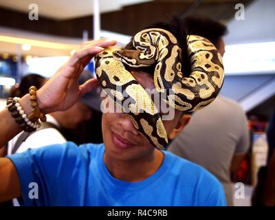 QUEZON CITY, PHILIPPINES - NOVEMBER 18, 2018: A pet shop owner puts a ball python on his head to show that it can be harmless unless threatened. - Stock Photo