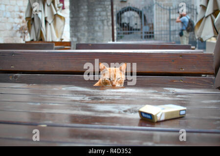 Kotor, Montenegro - September 20 2018: A stray orange tabby cat sits at an outdoor cafe in the Adriatic town of Kotor, Montenegro. - Stock Photo