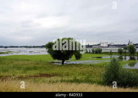 flooded meadows and pastures - Stock Photo