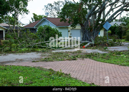 View of downed trees in front of house and hurricane irma damage in florida. - Stock Photo