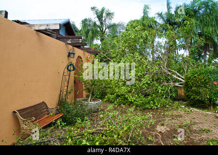 A fallen tree landed on house and covers driveway after hurricane irma in south florida. - Stock Photo