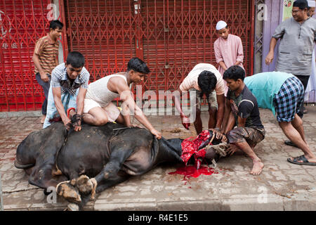 Slaughter of an animal during one of the biggest Muslim festivals the Eid-ul-Azha, also known as the Eid of Sacrifice. Dhaka, Bangladesh. - Stock Photo