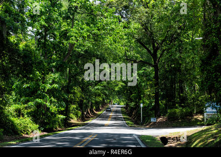 Tallahassee, USA - April 26, 2018: Capital city street scenic canopy road with cars in traffic in Florida day, tunnel branches arch path - Stock Photo