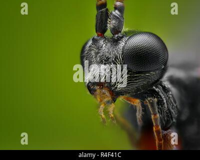 Extremely sharp and detailed study of a small wasp taken with a microscope objective stacked from many images into one very sharp photo.