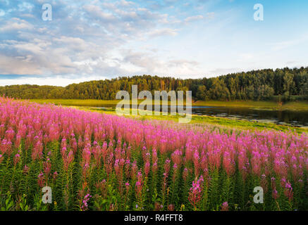 landscape summer fantastically bright red wild flowers river forest on riverside warm rays sunset - Stock Photo