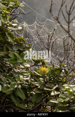 Hawaii Volcanoes National Park, Hawaii - A spider's web covered with moisture from steam vents at the Kilauea volcano. - Stock Photo
