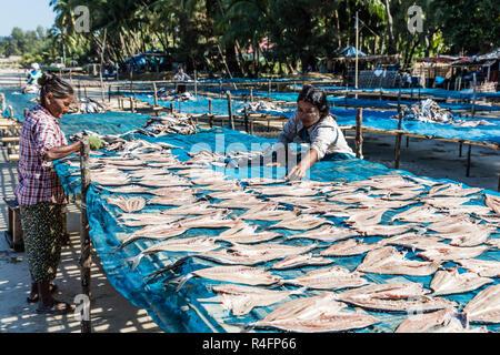 NGAPALI, MYANMAR - DECEMBER 14, 2016 : fish drying at Ngapali Beach Rakhine state in Myanmar (Burma) - Stock Photo