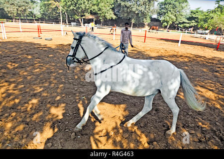 rider trains the horse in the riding course - Stock Photo