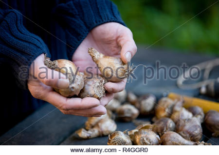 A man holding flower bulbs - Stock Photo
