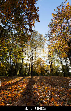 trees in autumn, close-up - Stock Photo