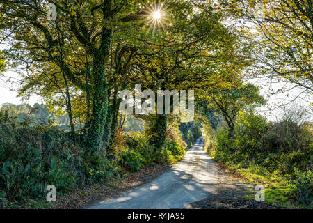 A sunny autumnal landscape showing a rural tree and hedge lined tarmac country lane, colours of golden yellow and brown, sunburst through the foliage. - Stock Photo
