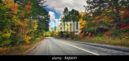 Asphalt Road path walkway through beautiful autumn forest. Panoramic composition - Stock Photo