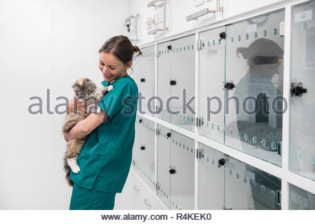 Nurse holding pet cat in recovery room of vet surgery - Stock Photo