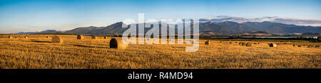 Harvested Field with Hay Bales in Golden Evening Light Under Low Tatras Mountains, Slovakia - Stock Photo