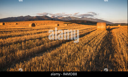 Harvested Field with Hay Bales in Golden Evening Light Under West Tatras Mountains, Slovakia - Stock Photo