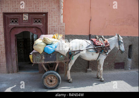 18-04-11. Marrakech, Morocco. A donkey hitched to a trailer, used to haul building materials inside the medina, where the streets are too narrow for v - Stock Photo