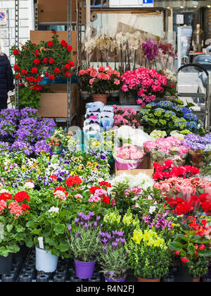 flower stall on street in Padua city in spring - Stock Photo