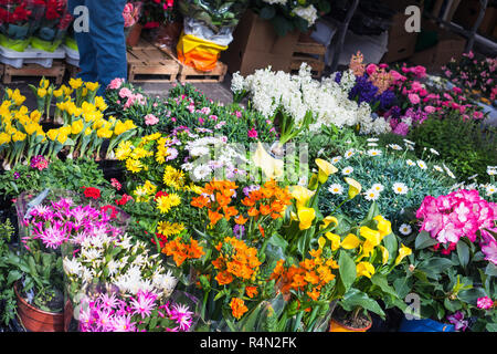 flower shop on street in Padua city in spring - Stock Photo