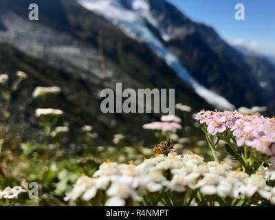 Flowers and bee in Montblanc - Stock Photo