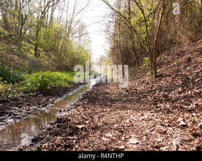 A Pathway and Little River Running Through a Forest - Stock Photo