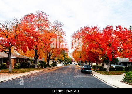 Modesto, California, USA. 27th November, 2018. Fall colors come to the streets of the working class town in the Central Valley  of California putting on a spectacular show of reds, yellows, and oranges to delight the eye, Credit: John Crowe/Alamy Live News - Stock Photo