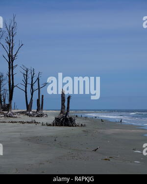 Surf pounding the Barrier Island sandy beaches trying to uproot the trees that are still standing upright! - Stock Photo