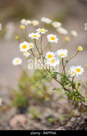 Photo of daisies in forest - Stock Photo