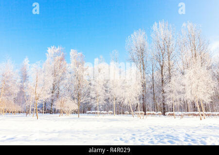 Frosty trees in snowy forest, cold weather in sunny morning. Tranquil winter nature in sunlight. Inspirational natural winter garden or park. Peaceful cool ecology nature landscape background - Stock Photo