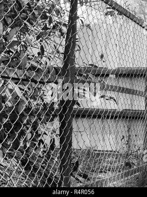 BLACK AND WHITE PHOTO OF CHAIN-LINK FENCE - Stock Photo