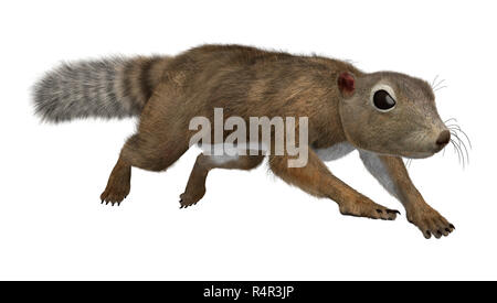 3D Rendering Gambian Sun Squirrel on White - Stock Photo