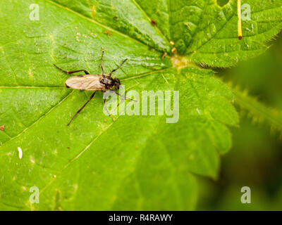 over head view of a fly spread out on leaf - Stock Photo
