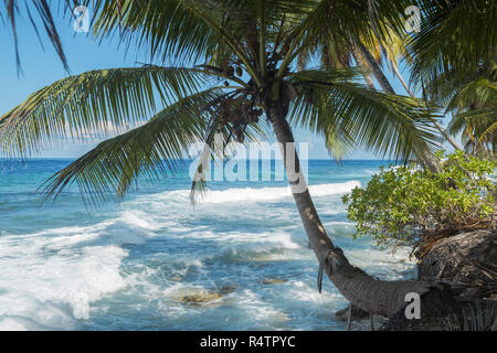 Surf at tropical beach with coconut palm tree, Fuvahmulah island, Indian Ocean, Maldives - Stock Photo